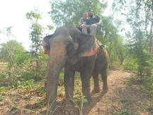 elephant ride 3